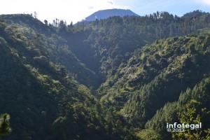 Bukit Cepu