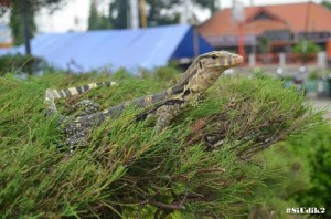 Herlambang Adi Irawan. SMKN 3 Kota Tegal. Potensi Wisata Alam Tegal